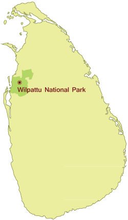 Big Game Campsite Wilpattu National Park