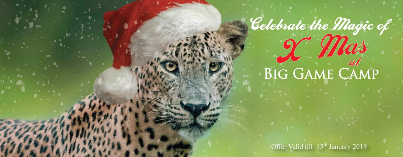 Celebrate the Magic of XMas Big Game camp 3nights 4days Web Banner1