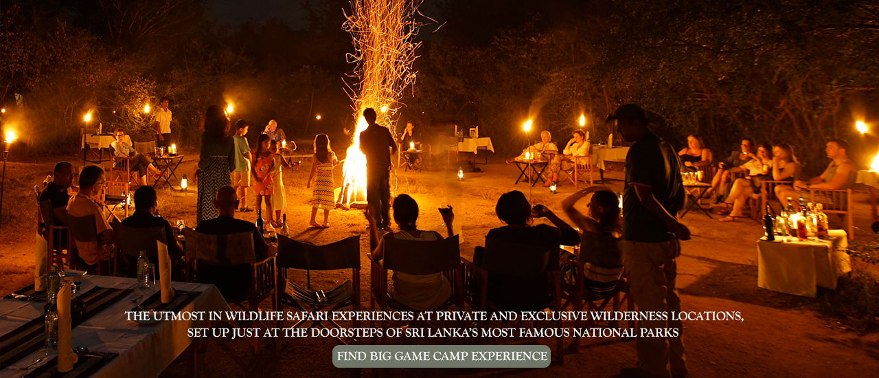 quality camping, safari and nest wildlife experience in Sri Lanka