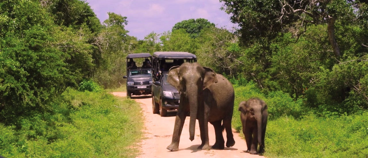 Experiencing the Great Outdoors with Sri Lanka Big Game Safaris