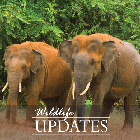Wildlife Updates