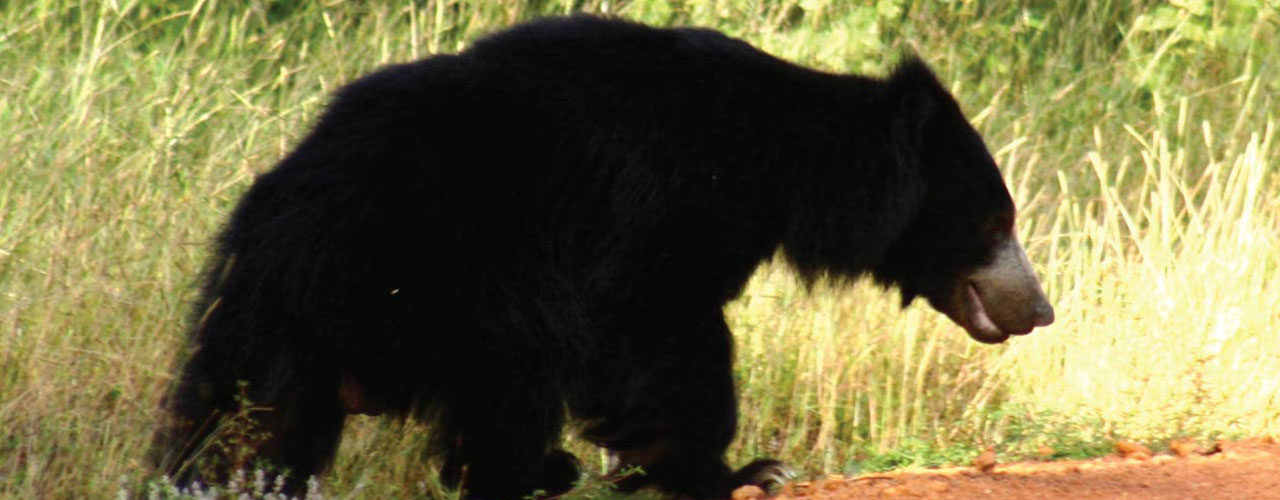 This bear had a broken front paw, but what we saw it doing will melt your heart