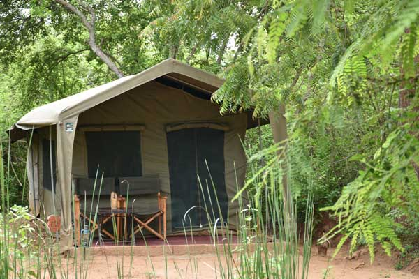 big game camp tent at yala national park sri lanka