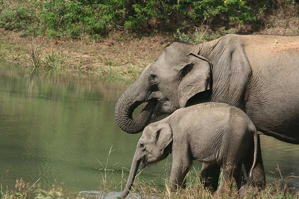 big game camps safaris at udawalawe national park sri lanka