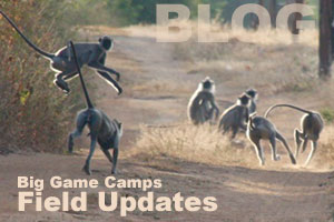 Big game camps sri lanka field updates