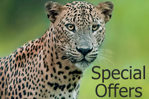 special offers big game camps sri lanka