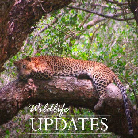 wildlife updates new